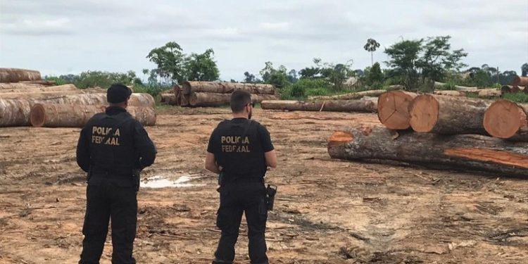 PF – Operação em São Félix do Xingu desativa quatro madeireiras ilegais